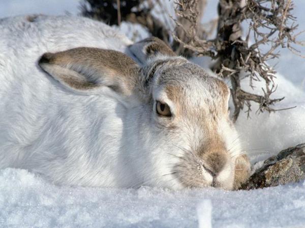Красивая картинка животные зимой