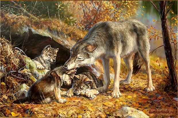 Волчицы рисунок