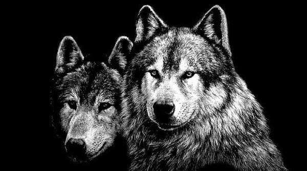 Скачать картинки и фото волков на аватарку