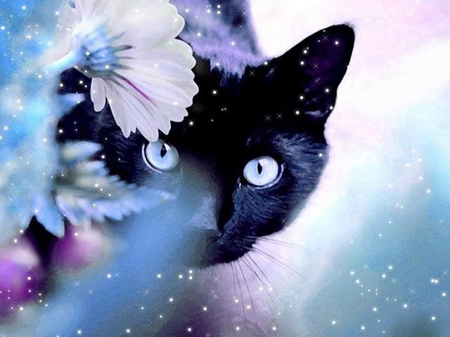Фото кошки на аву стим - 5e8