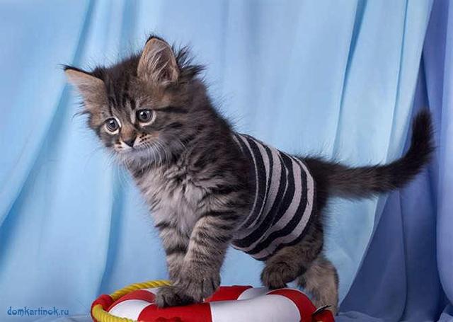котёнок в матросской тельняшке на спасательном круге