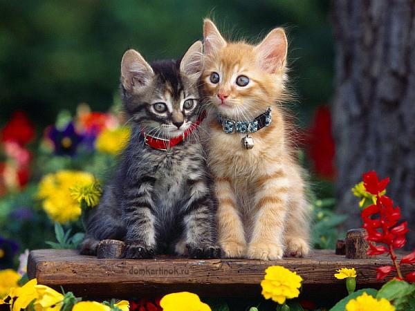 серый и рыжий котята