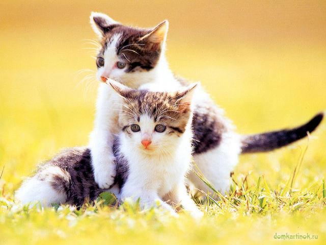 Котята играют в пожелтевшей травке