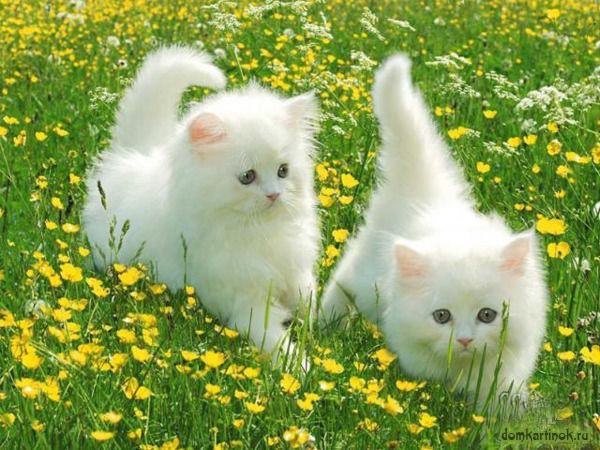 прикольные белые котята