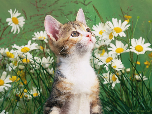 красивая фото картинка Котята