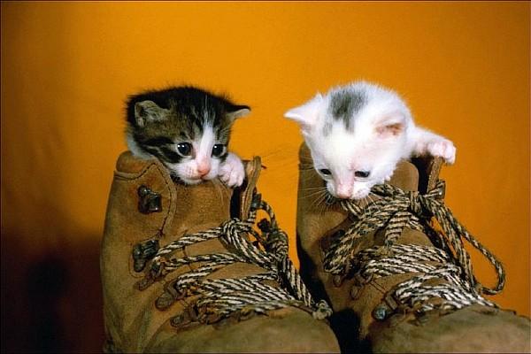 котята в ботинках