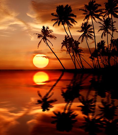 Остров море пальмы на закате солнца