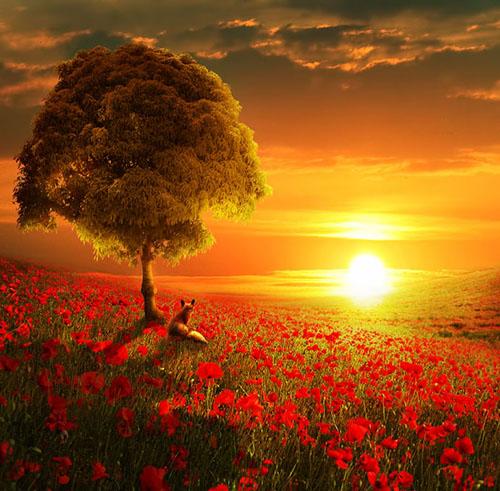 природа, пейзаж, закат солнышка вечером