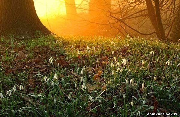 Весеннее утро фото картинка про утро