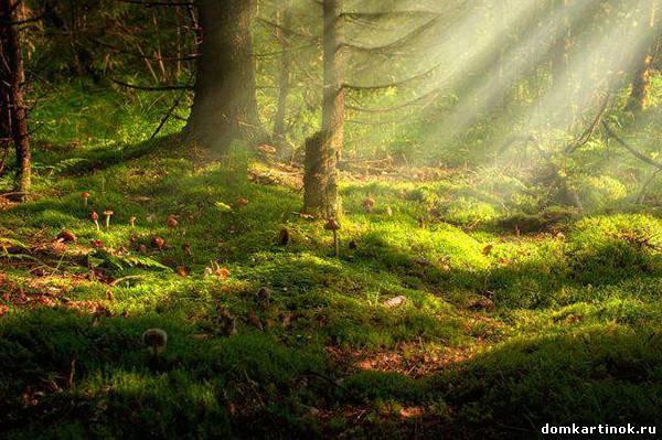 Красивая картинка про утро утро в лесу